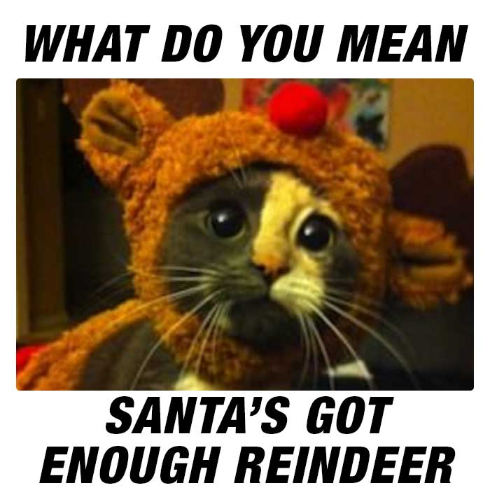 Did you say REINDEER?