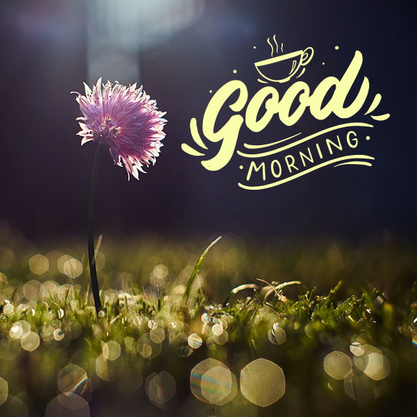 Good Morning Images Download Top Good Morning Pics In Hd Quality